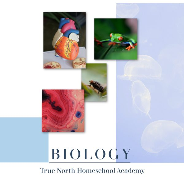 Live online biology class for homeschool high school