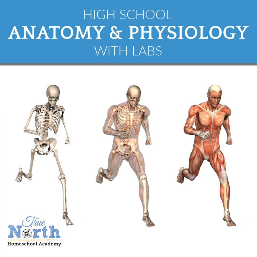 TNHA Product Image Anatomy & Physiology with labs online class for high school