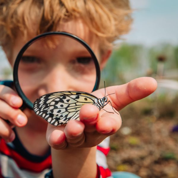 Getting started with homeschooling - let them learn about their interests. Homeschool boy holds a butterfly he discovered.